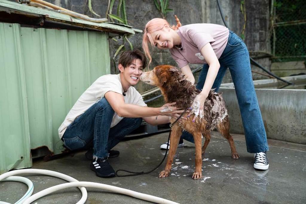 安心亞與夏和熙合力幫狗狗洗澡。CHECK2CHECK提供