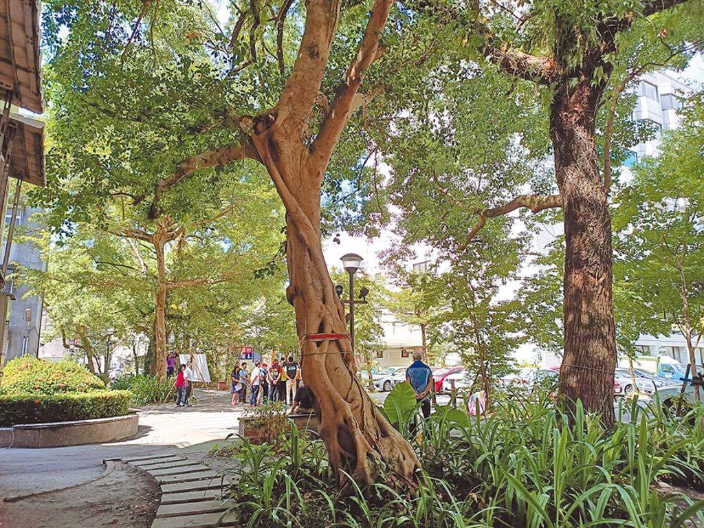 知名藝人羅大佑日前回到童年的故居、現在的陽明老樹廣場拍攝取景。(胡健森攝)
