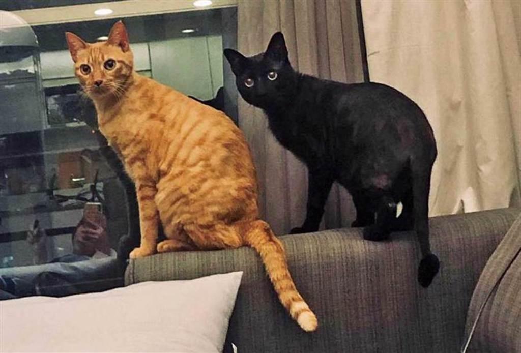 啾啾和Vitas兄弟倆相差12歲,但相處很融洽。(圖/齊石傳播提供)