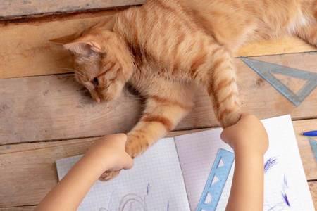 三花「貓貓蟲」狂扭求關注 小鏟屎作業寫不完超崩潰