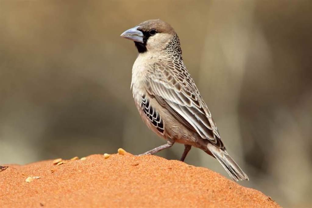 鳥類示意圖,與本文無關。(圖/達志影像)