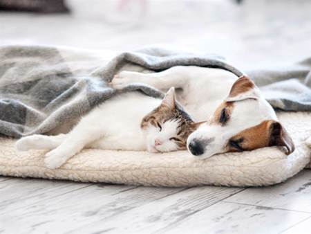 主人不在家狗狗焦慮趴沙發 橘貓暖心安慰:我陪你