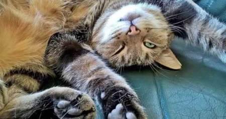 為何貓咪愛對主人露肚肚 動物行為學家這麼說