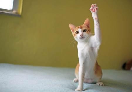 被媽唸燈沒關好困惑 奴才進房見愛貓舉手秒懂笑噴