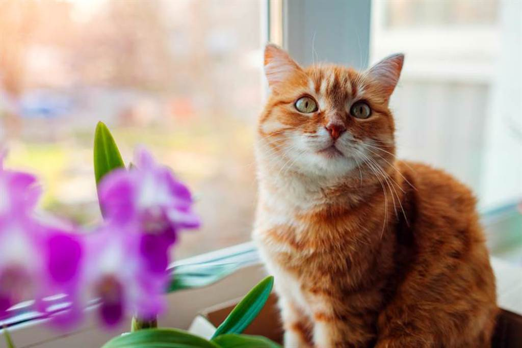 紙箱貓處在「有跟沒有之間」網一看笑翻:薛丁格的貓?(示意圖/達志影像)