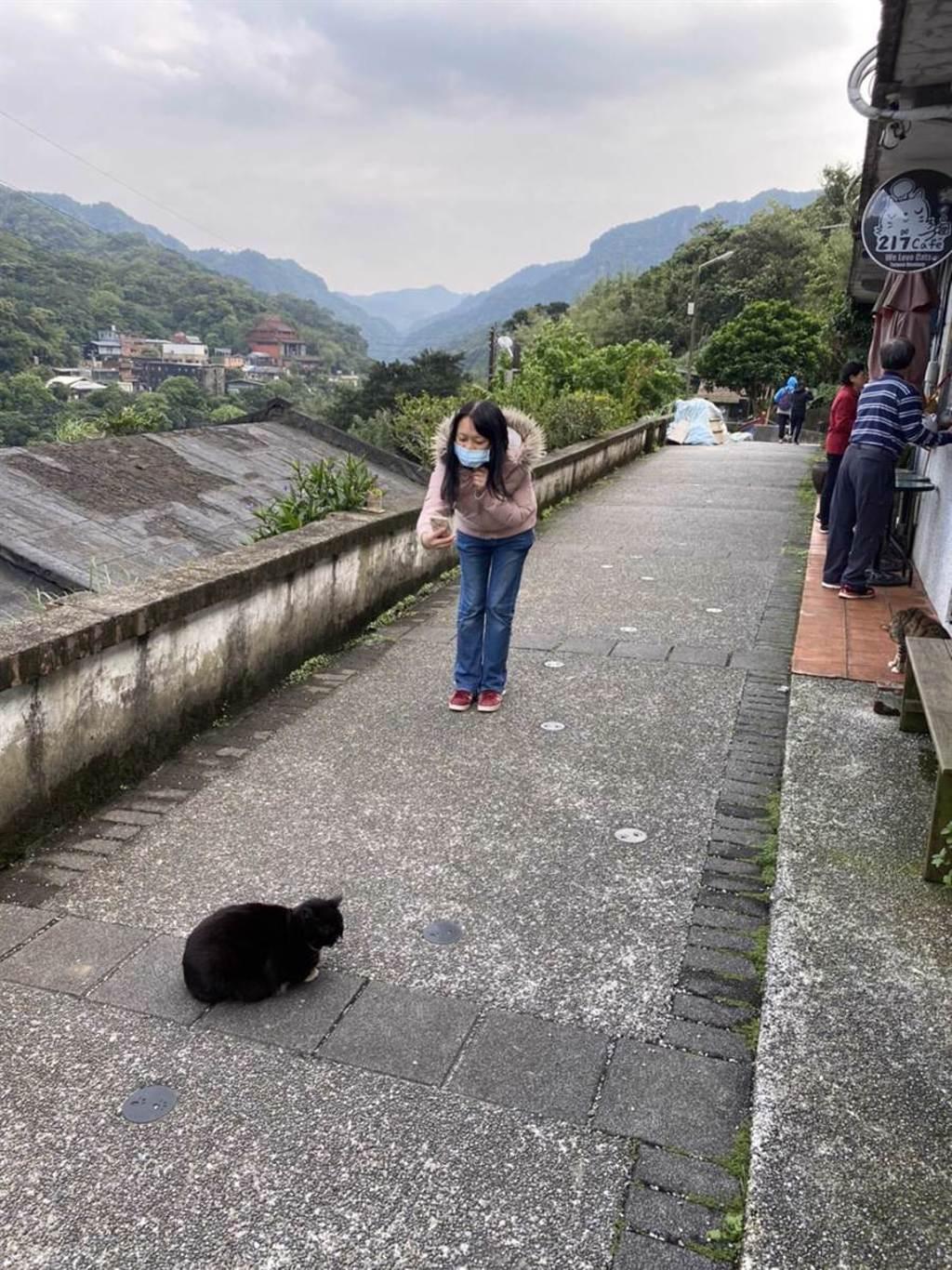 猴硐貓村即日起入內實名制、強制戴口罩。(新北動保處提供/吳康瑋新北傳真)