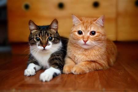 狂打鬧貓兄弟暴風雨前突安靜 主人困惑偷瞄見超暖一幕