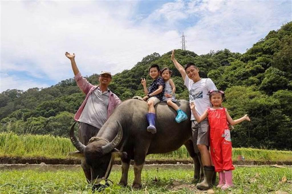 關西六福莊攜手水牛學校,親近水牛騎上牛背,體驗一日小牧童。( 圖/六福旅遊集團)