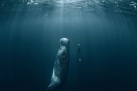 抹香鯨「組團站著睡」激似海洋版巨石陣