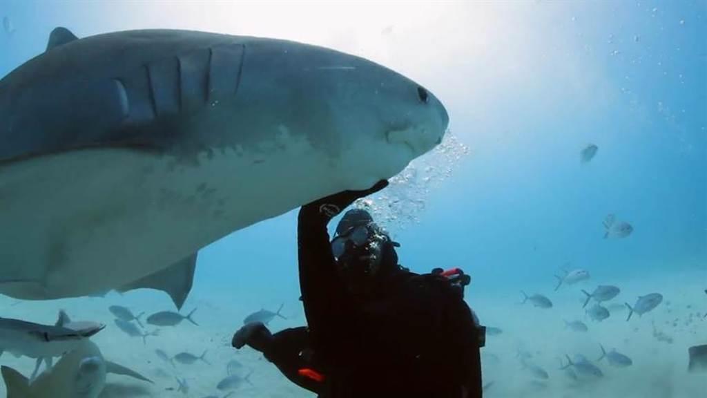 威爾史密斯潛水摸鯊魚,突破自我恐懼。(Discovery提供)
