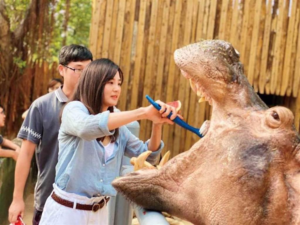 最近洪小鈴參加外景節目,被安排到新竹市立動物園幫河馬刷牙。(圖/翻攝自洪小鈴臉書)