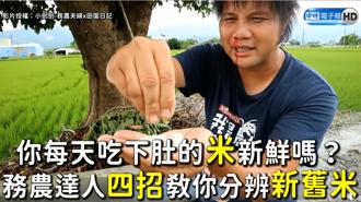 你每天吃下肚的米新鮮嗎? 務農達人四招教你分辨新舊米