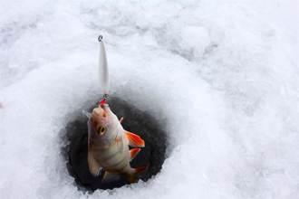釣魚拉出金蟾抱鯉 魚被當蝦蟆坐騎 釣客看傻急放生