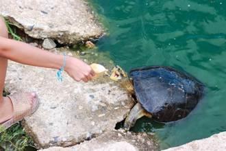 正妹河邊餵烏龜遇「不速之客」 淒厲尖叫後剩牠原地發呆