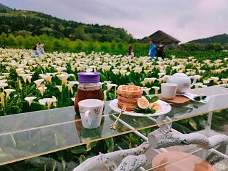 竹子湖花田您下 花園餐桌超顯浪漫