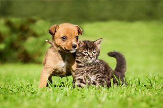 見流浪貓沒家躲雨 愛犬推牠跟自己走被拒 下秒百萬人淚崩