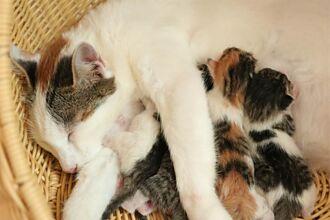 流浪貓被撿回家秒逃進天花板 獸醫困惑往內瞧發現6驚喜