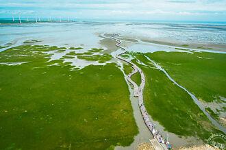 高美濕地生態免費導覽 5/13起開始報名