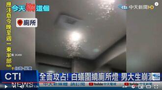 大雨要來了?大水蟻晚間大爆發全台民眾回報求救 鄭明典回應