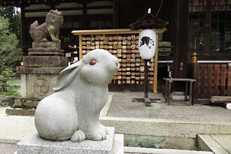 超萌兔子神社在京都 專求子求安產 可愛魅力無法擋