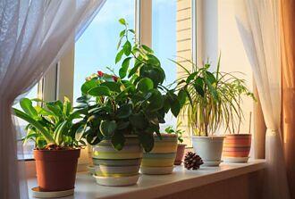 防疫關鍵在通風 居家種植這款植物 有助空氣清淨