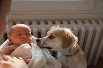 女嬰餓壞爆哭 愛犬靠近秒安靜 調監視器才知暖心原因