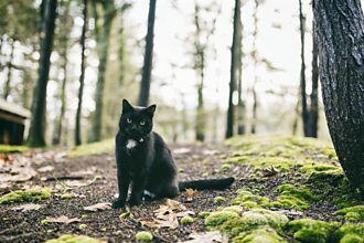 小黑貓護主拱背凶狠對峙 大黑熊打不過嚇到落跑