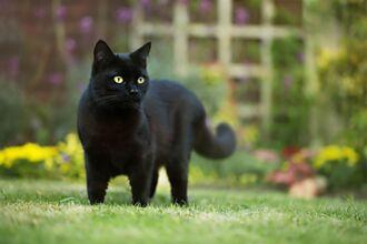 愛貓見主人失蹤 待農場不肯走 鄰居看懂暗示秒找到人