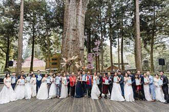 最高海拔的森林許諾  阿里山神木下婚禮報名中