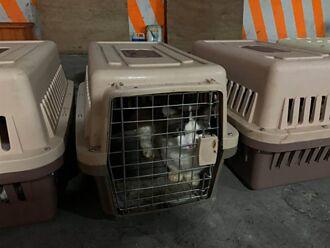 154隻貓鬼月遭撲殺 民俗專家:下令者恐運勢受損