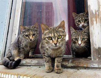 搬新家遇貓每天來串門子 綁紙條找飼主才知驚人內幕