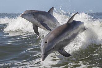 失溫男困冰冷海水 下秒被「海豚群包圍」竟奇蹟活命