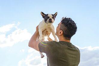 11歲愛犬過世飼主超不捨 3個月後抬頭見天空秒淚崩