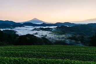 靜岡找茶趣   駿河茶園仙境品好茶