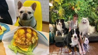 全台8間寵物友善餐廳推薦 夏日也能帶毛小孩吃喝玩樂